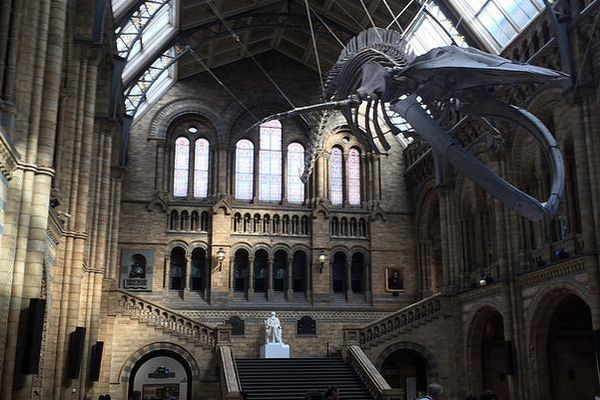 Natural History Museum London The Oliver Plaza Hotel